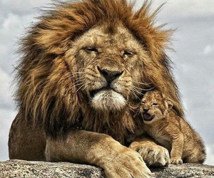 animal and lion image