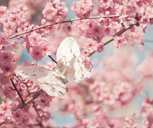 butterfly, pink, and spring image