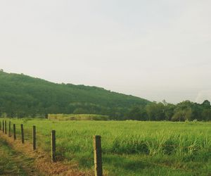 farm, green, and morning image