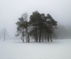 snow, tree, and nature image