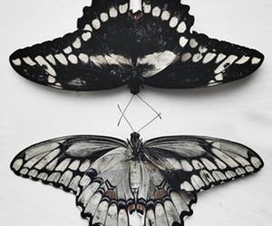 borboleta image