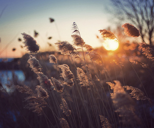 photography, sunset, and nature image