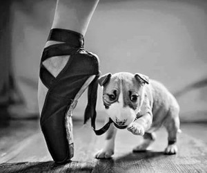ballet, dog, and cat image