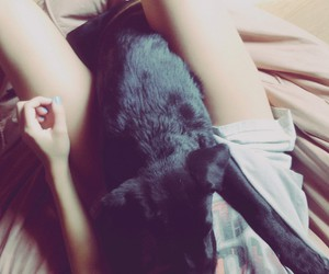 apolo, black, and dog image