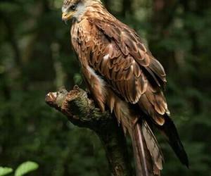 bird and птицы image