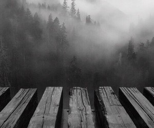 black and white, dark, and nature image
