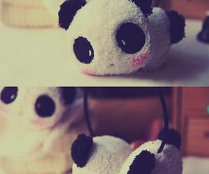 panda image