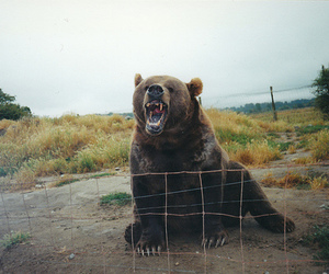 animal, bear, and photography image