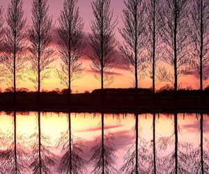trees and sunset image