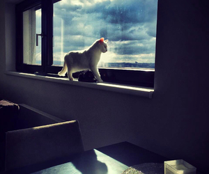 cats, clouds, and classy image