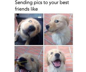 dog, funny, and best friends image