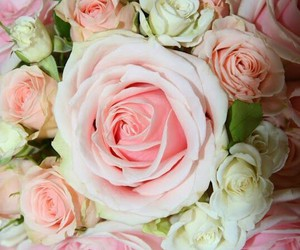 beautiful, pink roses, and pretty image