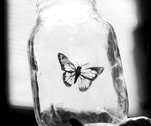 butterfly, freedom, and white image