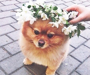 flowers, puppy, and dogs image