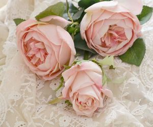flowers, lovely, and rose image