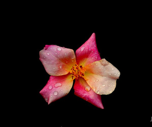 flower, photography, and pink image