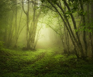 calm, wonderful, and forest image