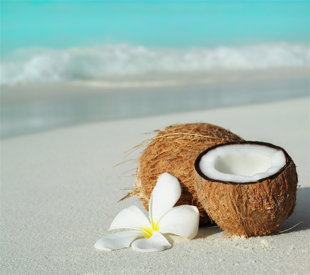 beach, coconut, and flower image