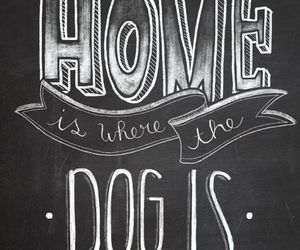 animal, dog, and quotes image