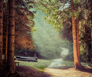 explore, forest, and free image