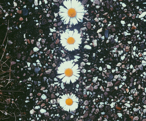 background, road, and daisy image