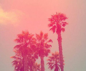 pink and palms image
