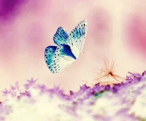 butterfly, nature, and nice image
