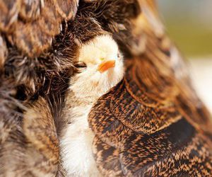animal, baby, and bird image