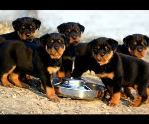 dog, doggies, and puppy image