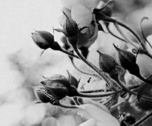black and white, flowers, and beautiful image
