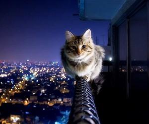 cat, city, and night image