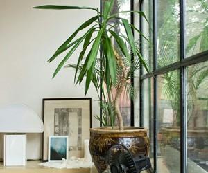 cool, plants, and decor image