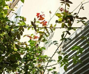 backyard, green, and cool image