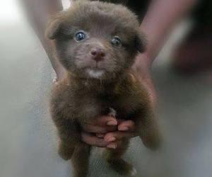 baby animals, cute animals, and dog image