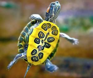 animal and Tortuga image