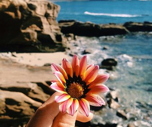 flowers, beach, and tumblr image
