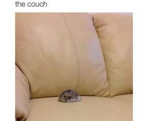 hamster image