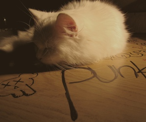 cat, sweet, and photo image