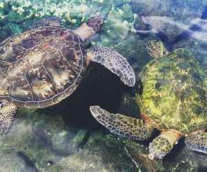 sea turtles, swimming, and yin & yang image