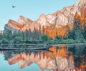 bird, california, and mountains image