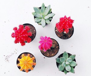 hipster, indie, and cactus image