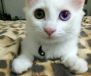 cat, eyes, and white image
