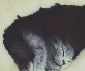 cat, gray, and sleepy image