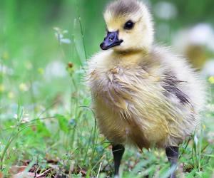 baby animals, birds, and cute animals image