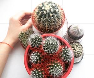 cactus and instagram image