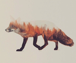 fox, art, and forest image