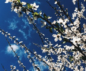 blossoms, nature, and sky image