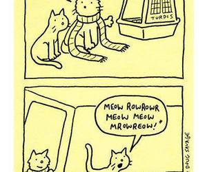 cat, doctor who, and funny image