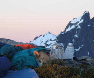 dog, mountains, and nature image