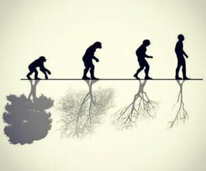 evolution, human, and nature image